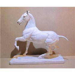 Лошадь анатомическая