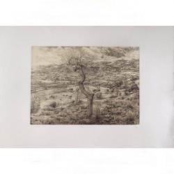 Бумага Rosaspina белая 70x100 см для всех видов печати, 220 г, 60% хлопок