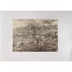 Бумага Rosaspina слон.кость для всех видов печати, 70x100 см, 285 г, 60% хлопок
